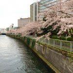 桜の季節には「花見釣り」がおすすめ!!