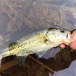 千葉県の「オススメのダム湖」バス釣りポイント3選