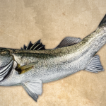 デジタル魚拓発注してみた。